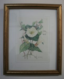 A set of four first edition reproduction prints of original botanical watercolours