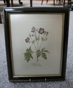 A set of four first edition reproduction prints of original botanical watercolours by Alice Cole